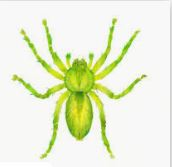 Name:  GreenSpider.JPG
