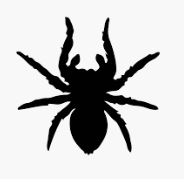 Name:  BlackSpider.JPG