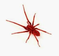 Name:  RedSpider_1.JPG